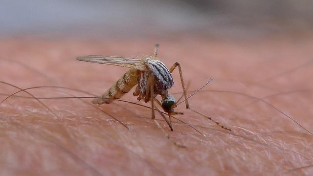 vi-rut-zika-2901